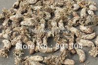 Free shipping Superfine Wild Cordyceps Sobolifera Chinese Rare Nourishing Herb Health Care100g