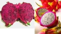 Free Shipping Dragon Fruit  Seeds,100 pcs/Pack