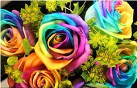 Free Shipping 170 Seeds Rare Holland Rainbow Rose Flower Seed To Your Lover
