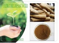 200:1 Eurycoma longifolia Jack / Tongkat Ali P.E.