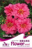 Free Shipping 1 Packs 100 Seeds Pink Sun Plant flower Seeds