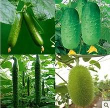 cucumber price