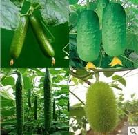 2 Bag  Cucumber seeds,Cuke Seeds, 10g per bag Green Vegetable Seeds Free Shipping