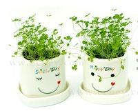 50 lovers mini plants gift lucky four leaf clover seeds plant bonsai