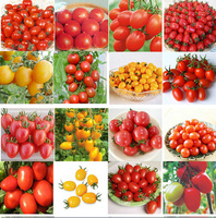 200pcs 24 KINDS Tomoto Seeds Purple Black Red Yellow Green Cherry Peach Pear Tomato Seed Organic Food for Garden FREE SHIPPING