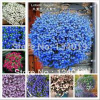 100 pcs / bag, Lobelia seeds, Sixfold Lee, regatta series, multicolor into, autumn new species, Mixed color