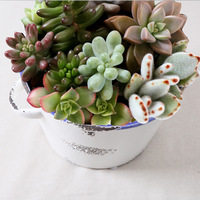 Ceramic meat flower pot flower pot meat basin cup flower hydroponic plants