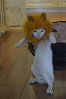 Lion's Mane Cat Hat wholesale pet cat's toy like lion mane hat Stuffed & Plush Toy Lion's Mane Hat for Cats Dogs