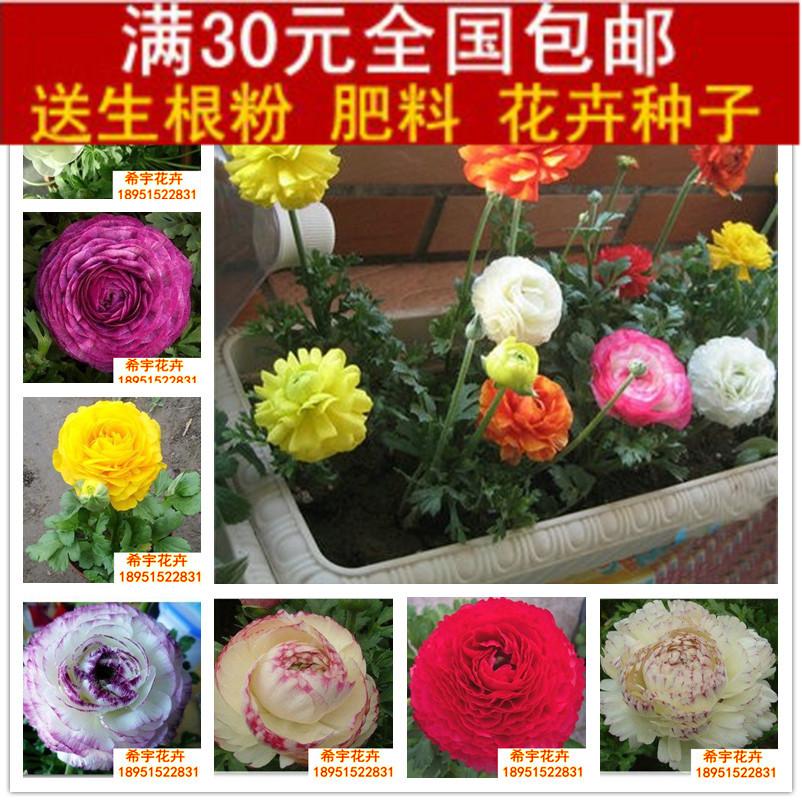 Plants flower bonsai wool flower bulbs seeped plant flower wool seeped
