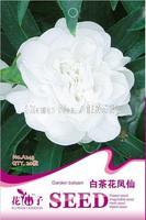 2013 seeds bag seeds white camellia impatiens finger flower 20 seeds a243