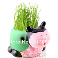 Free Shipping DIY Plant Of Grass Ladybug