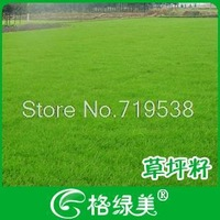 Grass seed flower flowers and plant seeds   200pcs