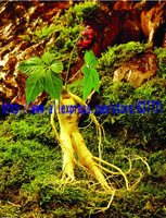 American Ginseng White Ginseng China High Quality Ginseng