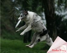 wholesale dog frisbee toy