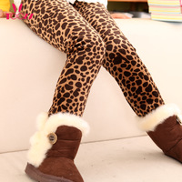 Children's clothing female winter child 2013 female child legging child winter child boot cut jeans plus velvet thickening
