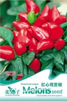 Free Shipping 6 Pack Ornamental  Pepper Vegetable Seeds B053