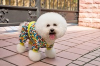 2014 Special Design small dog Clothes jacket apparel clothing Ceramic tile shape colorful Warm Four-legged poodle teddy clothes