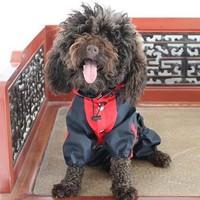 Pet clothes dog clothes dog hooded waterproof nylon raincoat poncho