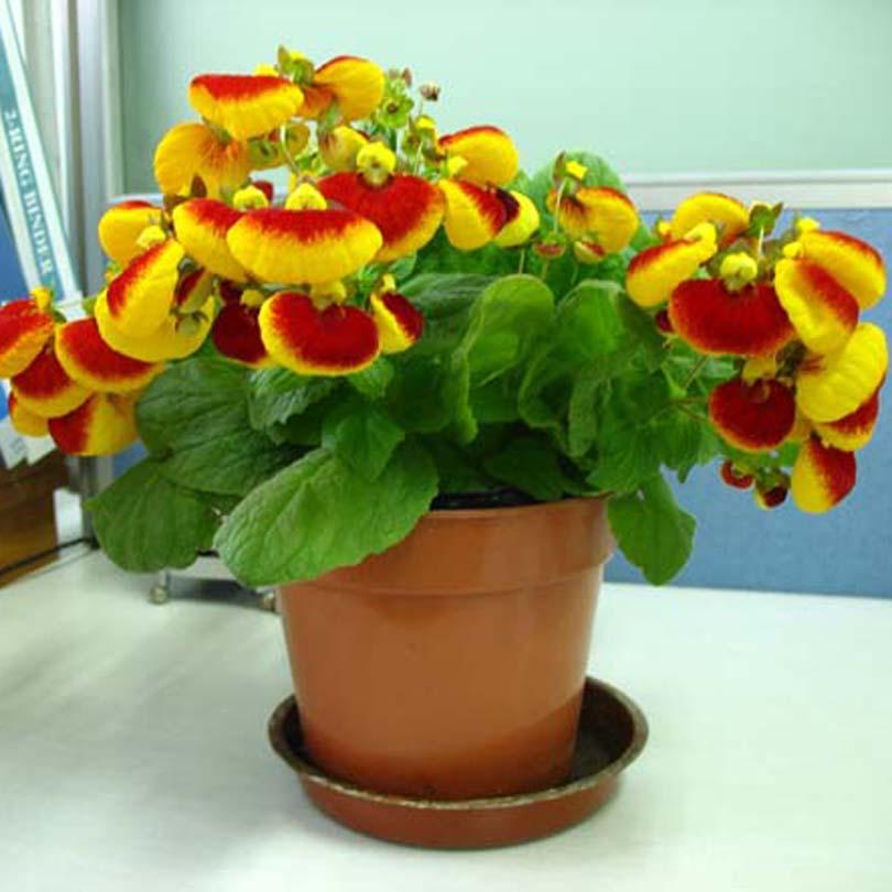 Flowering Plant Flowering Plants Indoor