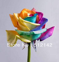 Rainbow Rose Seeds, 1 pack have 200 pieces rose seeds shipping by China Post !