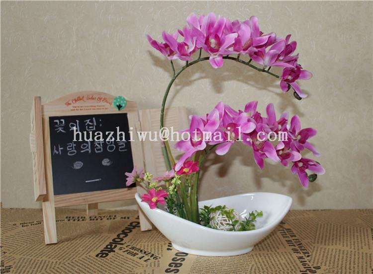 Orchids Wholesale Thailand Thailand Orchid Flowers