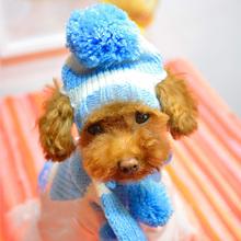 small dog collar price