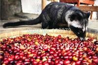 FREE SHIPPING!100% Kopi Luwak coffee beans Indonesia Original(12g)