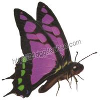 Tattoo stickers waterproof butterfly tattoo stickers gm226