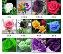 rose price