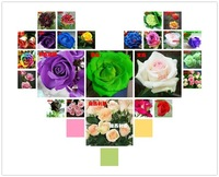 200 Seeds 24 colors rare rainbow rose flower seeds Multi-color Plants Home Garden bonsai colorful rose flower seed Free shipping