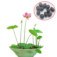 20 pcs 20 colors bowl lotus flower plants lotus seed plant bonsai Lotus seeds teach you How to Plant home Garden Free Shipping
