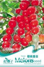seeds tomato promotion