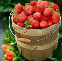 200pcs/lot free shipping climbing strawberry seeds for DIY home garden
