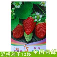 Balcony bonsai fruit red strawberry seeds strawberry seed autumn