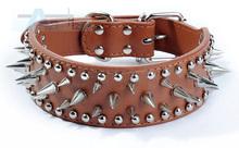 dog collar spike promotion
