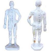 Acupuncture meridian points of the body people die acupuncture teaching model