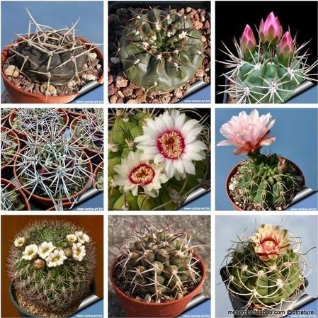 Free shipping 9 kinds 20 pieces cactus seeds mix bonsai seeds beautiful flower seeds diy home garden plant mini pots(China (Mainland))