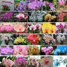 Grátis frete sementes de flores sementes de orquídeas cattleya multicolor borboleta orquídea bonsai semente monoflord - 100 pcs(China (Mainland))