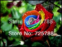 Mystic Rainbow Rose Bush Flower Seeds 100 Stratisfied Seeds Free Shipping bonsai home garden