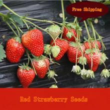 popular diy fruit