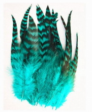 popular feather