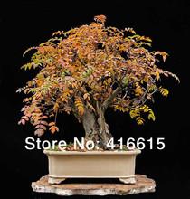 ash tree price