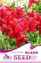 snapdragon flower promotion