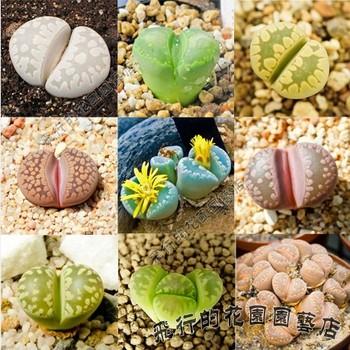 Image Result For Home And Garden Foruma