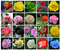 20 COLORS 1000 ROSE SEEDS (50 SEEDS EACH COLOR) WITH FULLY SEALED BAG,Flower Seeds,Rainbow Rose,DIY Bonsai
