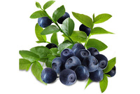 20 Pieces Blueberry Series Blue Berry Fresh Seeds For Blueberry Free Shipping