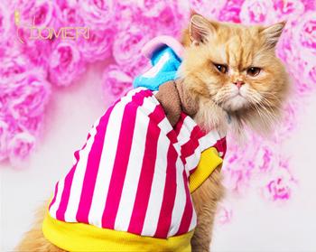 Весна и осень одежды любимчика кот превратился установлен одежды любимчика кота ватные куртки saidsgroupsdirector одежды