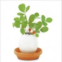 Free shipping 2014 Creative bonsai Desktop mini novelty Magic egg flower planter pots with seeds Gift packing home gardens