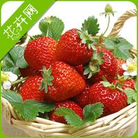 1 Packs 30 seeds Strawberry Fruit Seeds