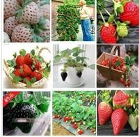 Free Shipping 100pcs big giant red fruit strawberry seeds DIY Garden fruit seeds balcony seeds
